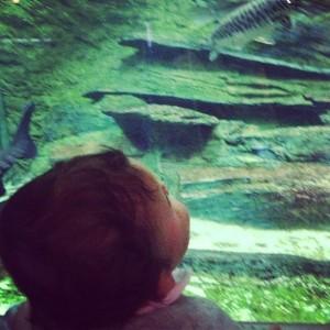 Moutarde admire l'aquarium